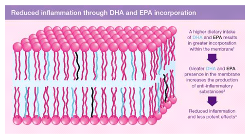 Reduced inflammation through DHA and EPA incorporation