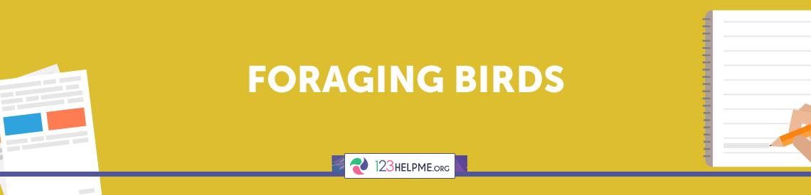 Foraging Birds Essay Sample